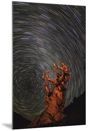 Long Exposure of Star Trails Above a Bristlecone Pine Tree in California, Usa-Babak Tafreshi-Mounted Photographic Print
