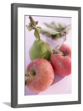 Pear and Two Apples with Stalks and Leaves (Overhead View)-Foodcollection-Framed Photographic Print
