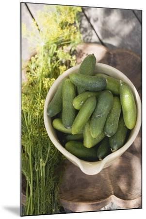 Pickling Cucumbers in Bowl, Fresh Dill Beside It-Foodcollection-Mounted Photographic Print