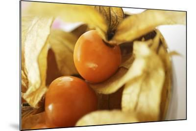 Physalis with Calyxes in a Bowl-Foodcollection-Mounted Photographic Print