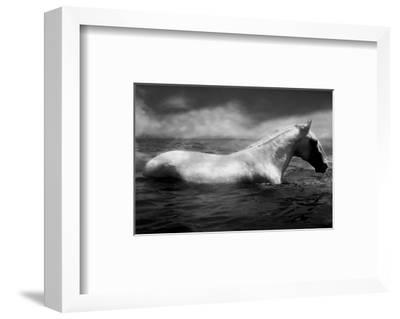 White Horse Swimming-Tim Lynch-Framed Photographic Print