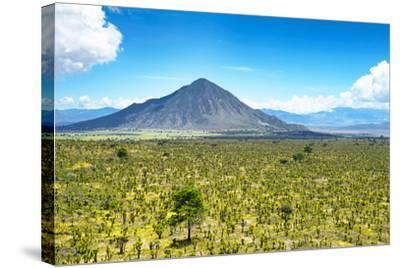 ?Viva Mexico! Collection - Desert Landscape in Puebla-Philippe Hugonnard-Stretched Canvas Print