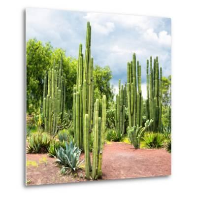 ¡Viva Mexico! Square Collection - Cardon Cactus II-Philippe Hugonnard-Metal Print