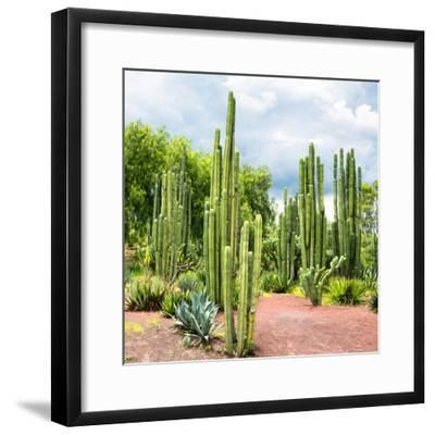¡Viva Mexico! Square Collection - Cardon Cactus II-Philippe Hugonnard-Framed Photographic Print