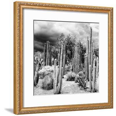 ¡Viva Mexico! Square Collection - Cardon Cactus B&W-Philippe Hugonnard-Framed Photographic Print