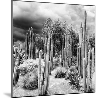 ¡Viva Mexico! Square Collection - Cardon Cactus B&W-Philippe Hugonnard-Mounted Photographic Print