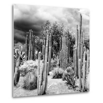 ¡Viva Mexico! Square Collection - Cardon Cactus B&W-Philippe Hugonnard-Metal Print
