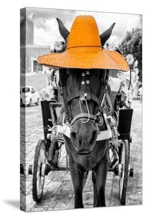 ¡Viva Mexico! B&W Collection - Horse with Light Orange straw Hat-Philippe Hugonnard-Stretched Canvas Print