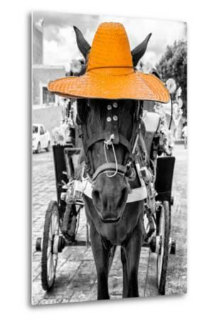 ¡Viva Mexico! B&W Collection - Horse with Light Orange straw Hat-Philippe Hugonnard-Metal Print