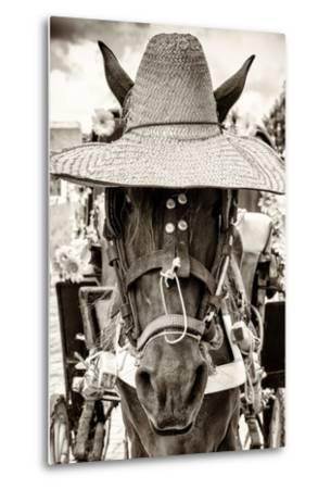 ¡Viva Mexico! B&W Collection - Portrait of Horse with Hat-Philippe Hugonnard-Metal Print