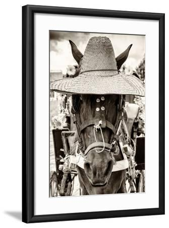¡Viva Mexico! B&W Collection - Portrait of Horse with Hat-Philippe Hugonnard-Framed Photographic Print