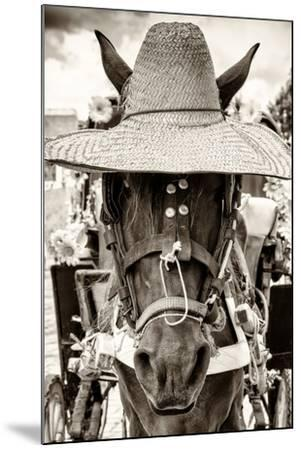 ¡Viva Mexico! B&W Collection - Portrait of Horse with Hat-Philippe Hugonnard-Mounted Photographic Print