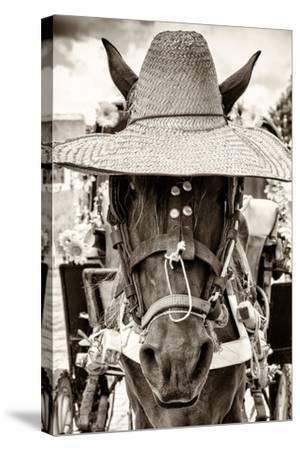 ¡Viva Mexico! B&W Collection - Portrait of Horse with Hat-Philippe Hugonnard-Stretched Canvas Print