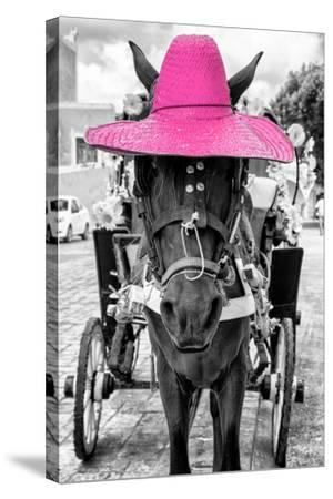¡Viva Mexico! B&W Collection - Horse with Pink straw Hat-Philippe Hugonnard-Stretched Canvas Print