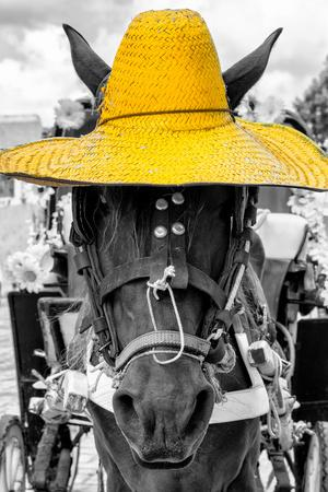 ¡Viva Mexico! B&W Collection - Portrait of Horse with Yellow Hat-Philippe Hugonnard-Framed Photographic Print