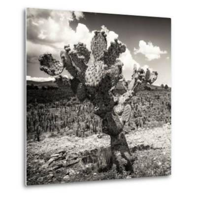 ¡Viva Mexico! Square Collection - Cactus Desert-Philippe Hugonnard-Metal Print