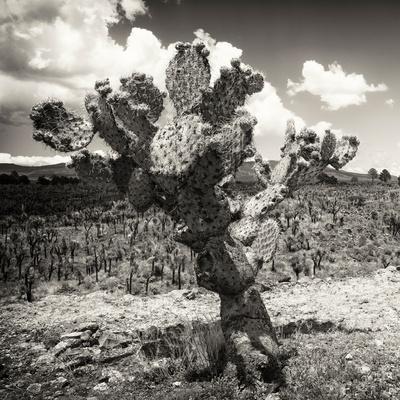 ¡Viva Mexico! Square Collection - Cactus Desert-Philippe Hugonnard-Premium Photographic Print