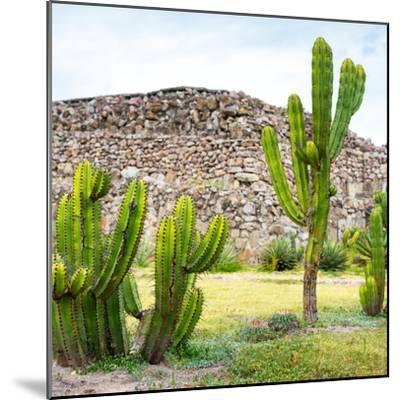 ¡Viva Mexico! Square Collection - Mexican Cactus II-Philippe Hugonnard-Mounted Photographic Print