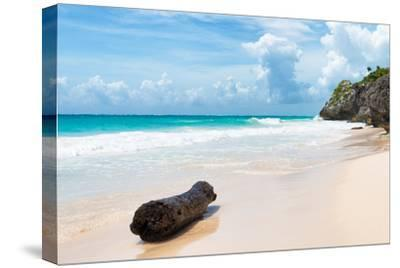 ?Viva Mexico! Collection - Tree Trunk on a Caribbean Beach-Philippe Hugonnard-Stretched Canvas Print