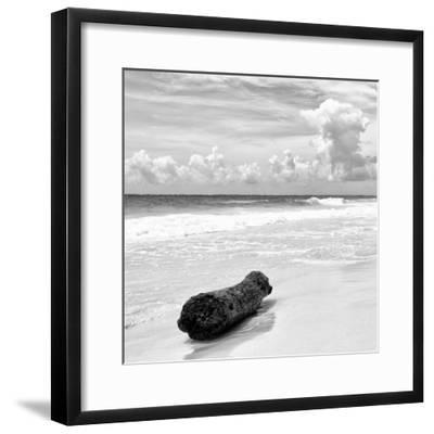 ¡Viva Mexico! Square Collection - Tree Trunk on a Caribbean Beach II-Philippe Hugonnard-Framed Photographic Print