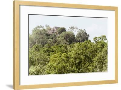 ?Viva Mexico! Collection - Ancient Maya City within the jungle II - Calakmul-Philippe Hugonnard-Framed Photographic Print