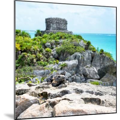 ¡Viva Mexico! Square Collection - Tulum Ruins along Caribbean Coastline with Iguana III-Philippe Hugonnard-Mounted Photographic Print