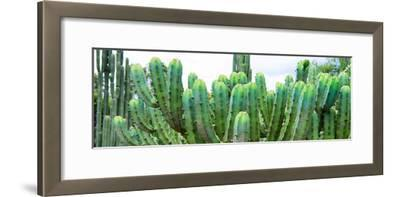 ?Viva Mexico! Panoramic Collection - Cactus I-Philippe Hugonnard-Framed Photographic Print
