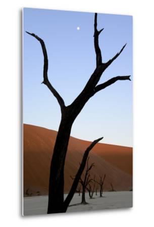 Dead Trees In Deadvlei Clay Pan, Sossusvlei. Namib-Naukluft National Park, Namibia, September 2013-Enrique Lopez-Tapia-Metal Print