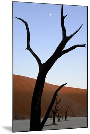 Dead Trees In Deadvlei Clay Pan, Sossusvlei. Namib-Naukluft National Park, Namibia, September 2013-Enrique Lopez-Tapia-Mounted Photographic Print