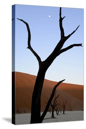 Dead Trees In Deadvlei Clay Pan, Sossusvlei. Namib-Naukluft National Park, Namibia, September 2013-Enrique Lopez-Tapia-Stretched Canvas Print