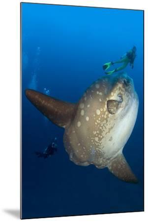 Scuba Diver With Ocean Sunfish (Mola Mola) Crystal Bay, Nusa Penida, Bali Island-Franco Banfi-Mounted Photographic Print