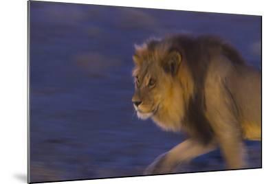 Male African Lion (Panthera Leo) At Night, Kalahari Desert, Botswana-Juan Carlos Munoz-Mounted Photographic Print