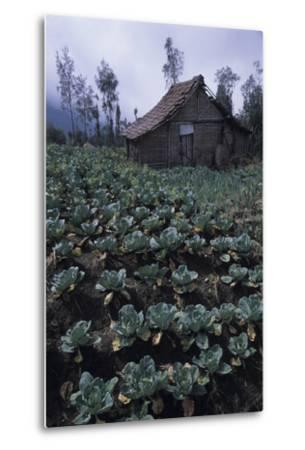 Farm Building In Bromo-Tengger-Semeru National Park, Java, Indonesia-Daniel Gomez-Metal Print