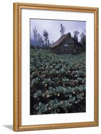 Farm Building In Bromo-Tengger-Semeru National Park, Java, Indonesia-Daniel Gomez-Framed Photographic Print
