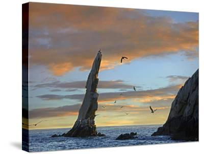 Sunset, Brown Pelicans on Rock Formation, Cabo San Lucas, Mexico-Tim Fitzharris-Stretched Canvas Print