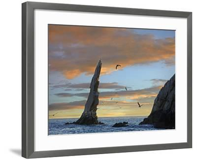 Sunset, Brown Pelicans on Rock Formation, Cabo San Lucas, Mexico-Tim Fitzharris-Framed Photographic Print