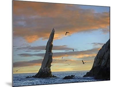 Sunset, Brown Pelicans on Rock Formation, Cabo San Lucas, Mexico-Tim Fitzharris-Mounted Photographic Print