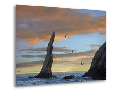 Sunset, Brown Pelicans on Rock Formation, Cabo San Lucas, Mexico-Tim Fitzharris-Metal Print