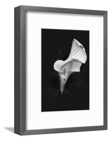Europe, Ireland, Dublin. Calla Lily Black and White-Jaynes Gallery-Framed Photographic Print