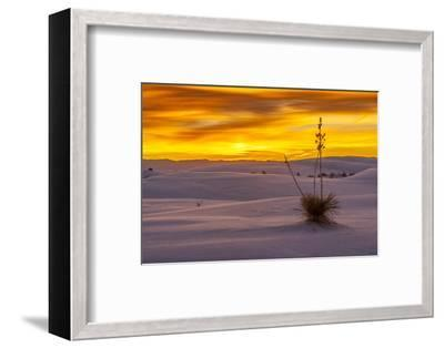 New Mexico, White Sands National Monument. Sunset on Desert and Yucca-Jaynes Gallery-Framed Photographic Print
