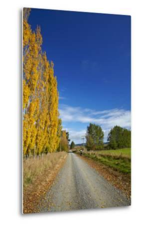 Poplar Trees in Autumn and Road, Near Lovells Flat, South Otago, South Island, New Zealand-David Wall-Metal Print