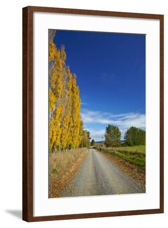 Poplar Trees in Autumn and Road, Near Lovells Flat, South Otago, South Island, New Zealand-David Wall-Framed Photographic Print
