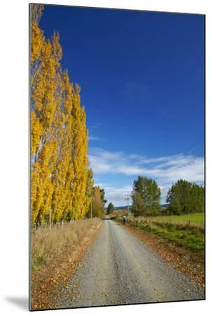 Poplar Trees in Autumn and Road, Near Lovells Flat, South Otago, South Island, New Zealand-David Wall-Mounted Photographic Print