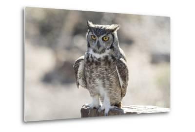 Arizona, Buckeye. Great Horned Owl Perched on House-Jaynes Gallery-Metal Print