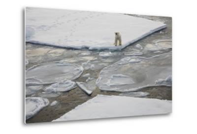 Norway, Svalbard, Spitsbergen. Polar Bear Stands on Sea Ice-Jaynes Gallery-Metal Print