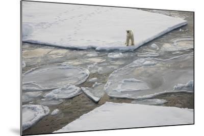 Norway, Svalbard, Spitsbergen. Polar Bear Stands on Sea Ice-Jaynes Gallery-Mounted Photographic Print