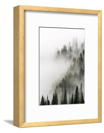 Cloud Forest, Glacier National Park, Montana-Russ Bishop-Framed Photographic Print