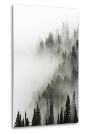 Cloud Forest, Glacier National Park, Montana-Russ Bishop-Metal Print