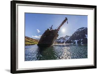 Ocean Harbor, South Georgia Island. the Shipwreck Bayard on Beach at Sunrise-Jaynes Gallery-Framed Photographic Print