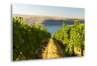 Washington State, Tri-Cities. the Benches Vineyards-Richard Duval-Metal Print